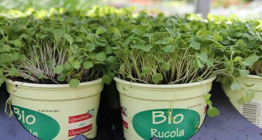 Bio-Ruccola  RWA
