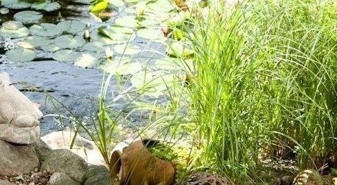 Gartenteich anlegen lagerhaus thermenland for Gartenteich aus reifen