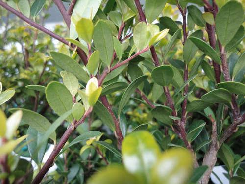 buchsbaum durch andere pflanzen ersetzen lagerhaus weinviertel mitte. Black Bedroom Furniture Sets. Home Design Ideas