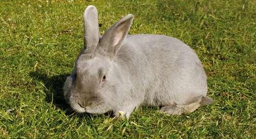 futter f r kaninchen meerschweinchen hamster und kleinnager lagerhaus. Black Bedroom Furniture Sets. Home Design Ideas