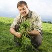 Saatgut für das Grünland