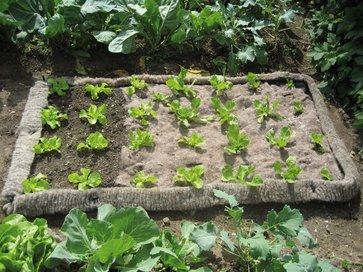 schafwolle sch tzt pflanzen vor schnecken lagerhaus. Black Bedroom Furniture Sets. Home Design Ideas