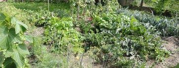 Selbstversorger-garten Anlegen | Lagerhaus Selbstversorger Garten Anlegen Obst Gemuse