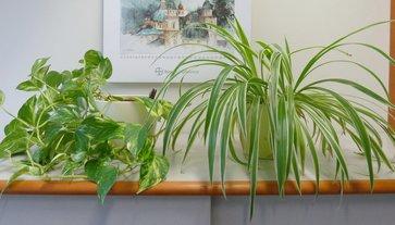zimmerpflanzen pflege im herbst und winter lagerhaus. Black Bedroom Furniture Sets. Home Design Ideas