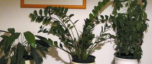 Pflanzen Für Dunkle Räume zimmerpflanzen für dunkle räume lagerhaus