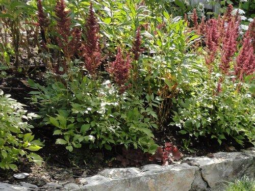 Wie Man Steile Hänge Und Böschungen Bepflanzt Lagerhaus