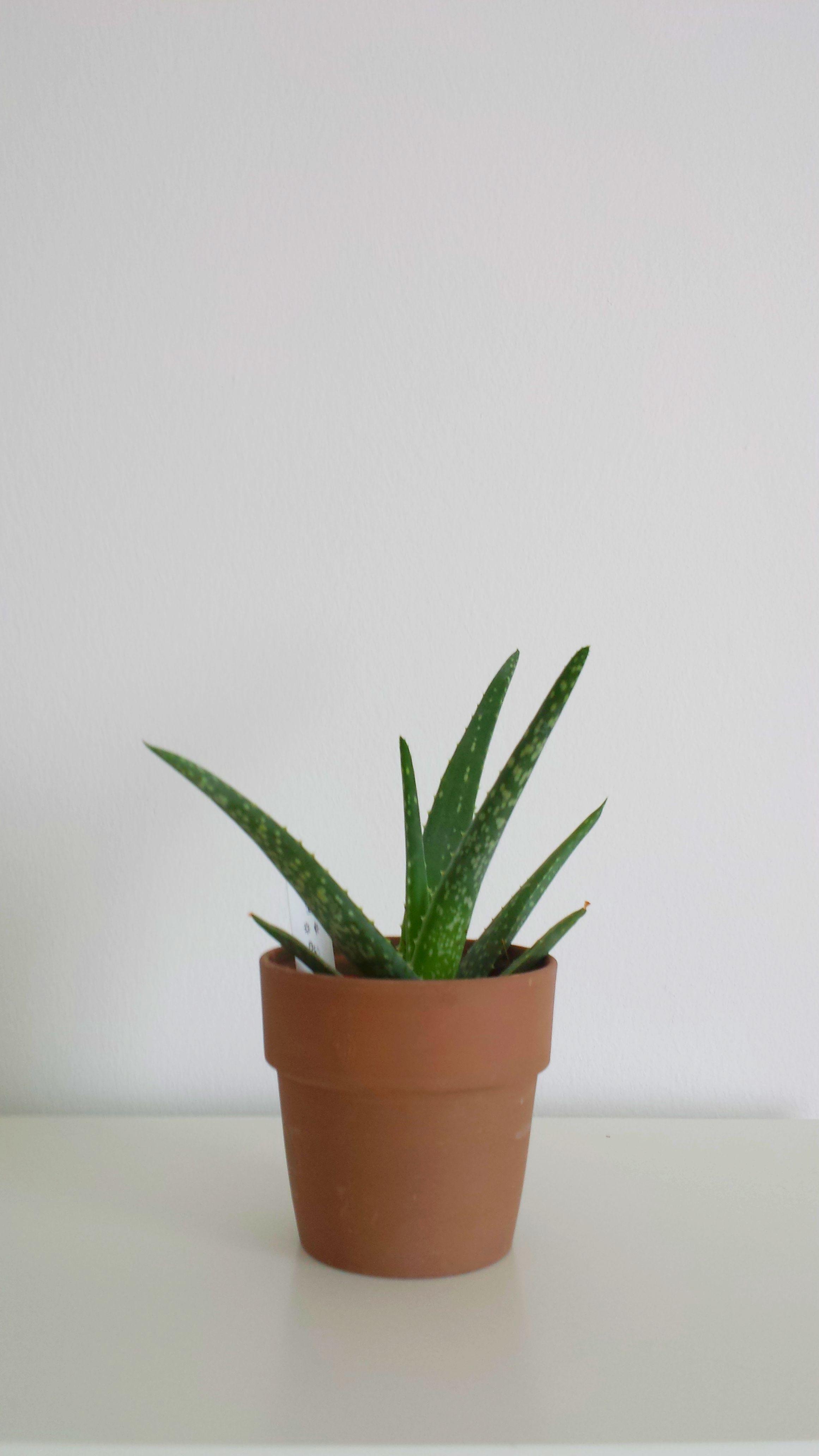 Luftreinigende Pflanzen Fürs Schlafzimmer | Lagerhaus