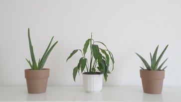 Pflanzen Schlafzimmer luftreinigende pflanzen fürs schlafzimmer lagerhaus