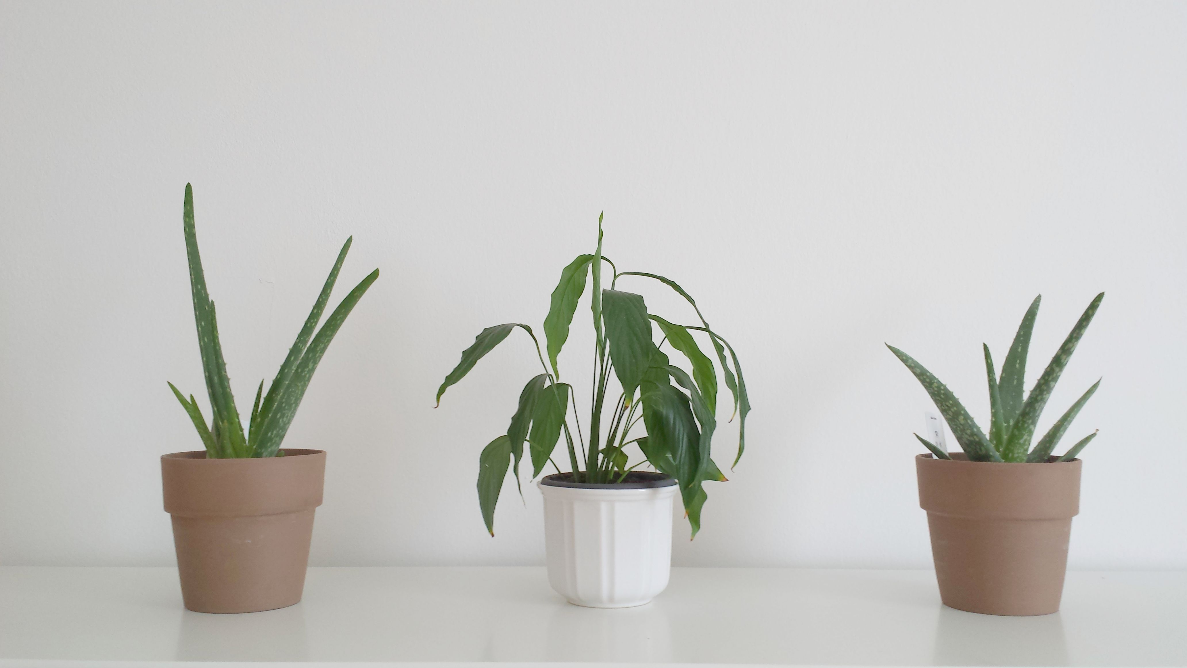 Pflanzen Schlafzimmer Pflanzen Schlafzimmer Pflanzen Schlafzimmer  [149923457638750]